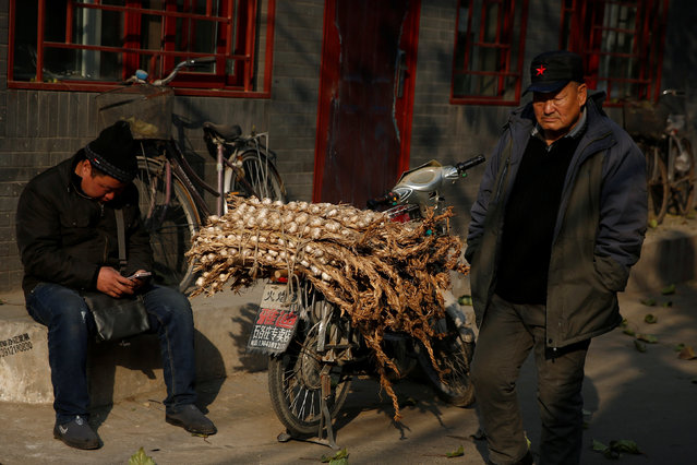 A man sits next to a motorbike loaded with garlic bulbs in Beijing, China, November 30, 2016. (Photo by Thomas Peter/Reuters)