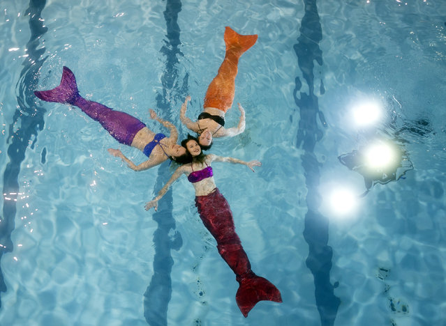 Marielle Chartier Henault (front), a professional mermaid and founder of AquaMermaid, practices in a pool with Vickie Leuenberger (R) and Aurelie Suberchicot in Montreal, February 19, 2015. (Photo by Christinne Muschi/Reuters)