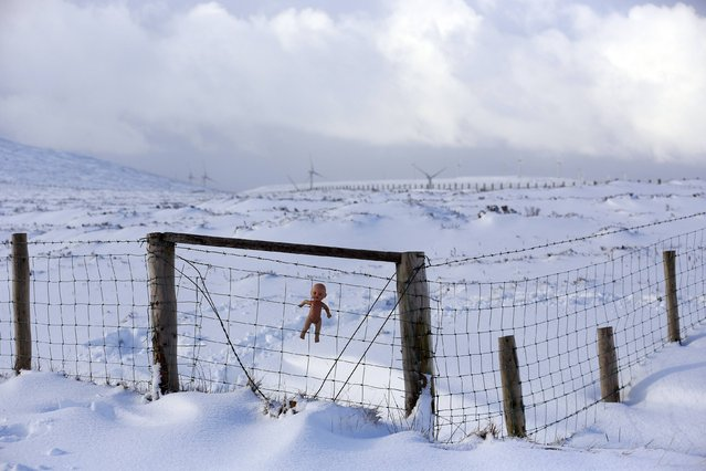 A child's doll is placed on a fence near an illegal dump on Slieve na Orra mountain near the village of Cargan after heavy snow led to traffic disruptions and the closure of schools across Northern Ireland January 29, 2015. (Photo by Cathal McNaughton/Reuters)