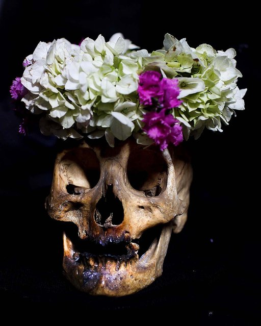 """A decorated human skull or """"natita"""" is on display as part of the Natitas Festival at the Cementerio General, in La Paz, Bolivia. (Photo by Juan Karita/Associated Press)"""