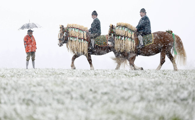 Local residents dressed in traditional Bavarian clothes of the region  ride during  heavy snowfall   at the traditional Georgi  (St, George) horse riding procession on Easter Monday in Traunstein, southern Germany, Monday, April 6, 2015. (Photo by Matthias Schrader/AP Photo)