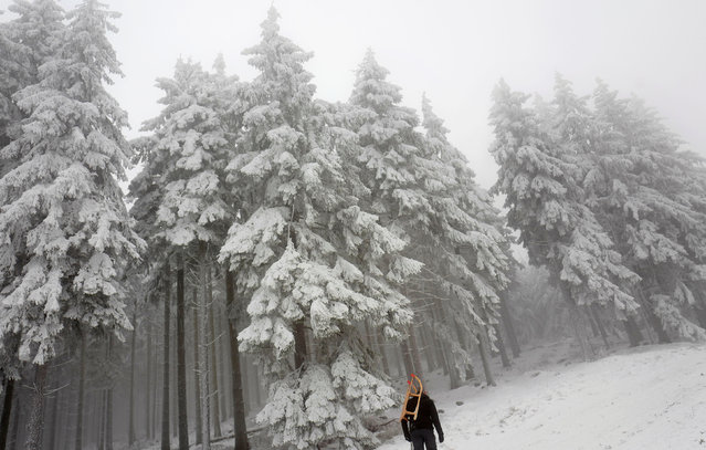 A man carries his sledge up to the Feldberg mountain, in Germany January 8, 2017. (Photo by Kai Pfaffenbach/Reuters)