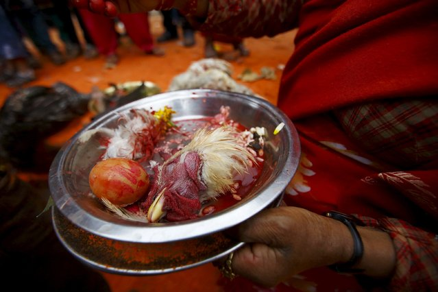 The head of a sacrificed chicken is seen on an offering plate during the Sindoor Jatra vermillion powder festival at Thimi, in Bhaktapur April 15, 2015. (Photo by Navesh Chitrakar/Reuters)