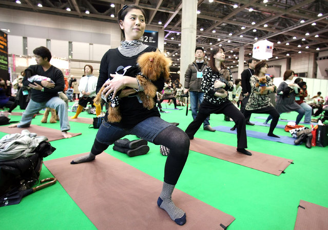 Owners and their dogs experience Dog Yoga at the New Year Dog Party held at Tokyo Big Sight on January 12, 2008 in Tokyo, Japan. The event is opened for 2 days on the weekend for the owners and their dogs to enjoy experiencing dogs' fashion and life style with dogs.  (Photo by Junko Kimura/Getty Images)