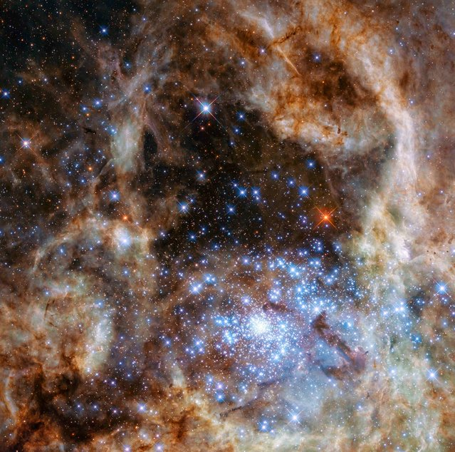 The central region of the Tarantula Nebula in the Large Magellanic Cloud is seen in an undated image taken by the NASA/ESA Hubble Space Telescope released March 17, 2016. This cluster contains hundreds of young blue stars, among them the most massive star detected in the Universe so far, according to a NASA news release. Astronomers using the unique ultraviolet capabilities of the NASA/ESA Hubble Space Telescope have identified nine monster stars with masses over 100 times the mass of the Sun in the star cluster R136.  (Photo by P. Crowther (University of Sheffield)/Reuters/NASA/ESA)