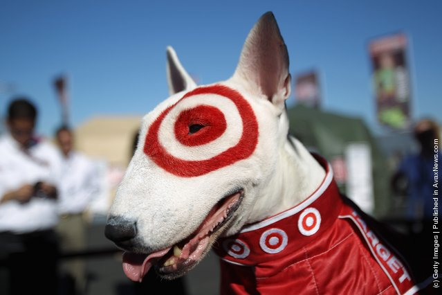 Bullseye the Target dog poses for pictures following the qualifying session for the IZOD IndyCar Series Indy Grand Prix of Sonama race at Infineon Raceway