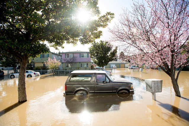 A Ford Bronco rests in floodwaters on February 22, 2017, in the Rock Springs area of San Jose, California. Thousands of people were ordered to evacuate their homes early Wednesday in the northern California city of San Jose as floodwaters inundated neighborhoods and forced the shutdown of a major highway. (Photo by Noah Berger/AFP Photo)