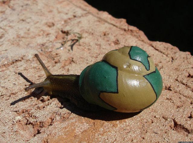 Snailpimp By Stefan Siverud