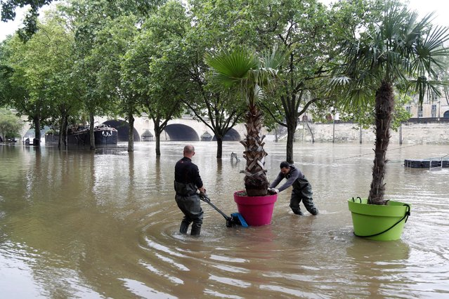 Workers remove palm trees from the banks as high waters causes flooding along the Seine River in Paris, France, June 1, 2016. (Photo by Charles Platiau/Reuters)