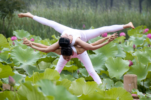 Women practice yoga at a lotus pond in Tiande Lake on the International Yoga Day on June 21, 2017 in Taizhou, Jiangsu Province of China. (Photo by VCG/VCG via Getty Images)