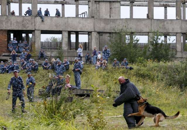 A German shepherd dog attacks a trainer during an annual cynologist competition for members of the regional penitentiary camps system outside the Siberian city of Krasnoyarsk, Russia, August 14, 2015. (Photo by Ilya Naymushin/Reuters)