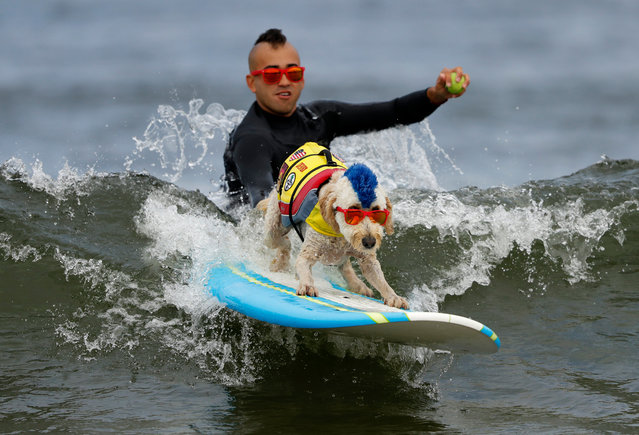 Derby the dog surfs while getting a push off by his owner Kentucky during the World Dog Surfing Championships at Linda Mar Beach in Pacifica, California, USA, 05 August 2017. Abbie holds the 2013 Guinness World Record for the Longest Wave Surfed by a dog. (Photo by John G. Mabanglo/EPA)