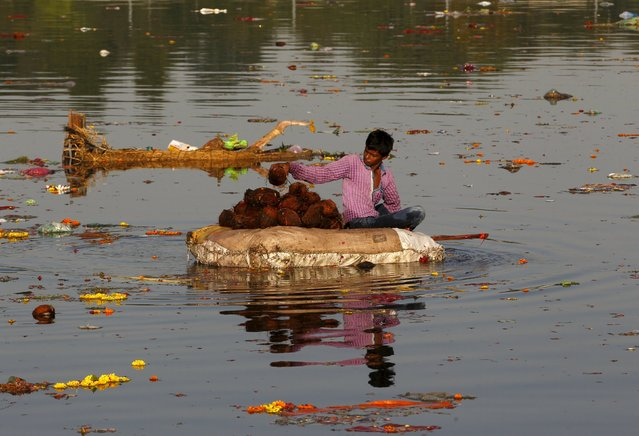 A boy collects coconuts thrown as offerings by worshippers in the Sabarmati river, a day after the immersion of idols of the Hindu god Ganesh, the deity of prosperity, in Ahmedabad, India, September 28, 2015. (Photo by Amit Dave/Reuters)