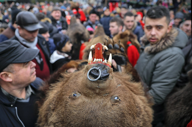 In this Saturday, December 30, 2017 picture people wearing a bear fur costumes make their way through the crowds during an annual bear parade in Comanesti, Romania. It's a tradition that originated in pre-Christian times, when dancers wearing colored costumes or animal furs went from house to house in villages, singing and dancing to ward off evil. (Photo by Vadim Ghirda/AP Photo)