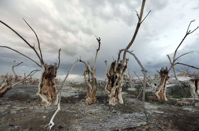 Deadwood is pictured in the onetime spa and resort town Epecuen, November 5, 2015. (Photo by Enrique Marcarian/Reuters)