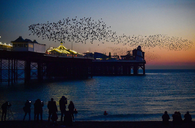 Crowds enjoy the late afternoon sunset and starling murmuration over the pier in the Brighton resort on England's south coast on November 29, 2020. (Photo by Simon Dack/Alamy Live News)