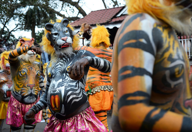 """More than 300 mainly pot-bellied men painted as leopards and tigers roamed the streets of Thrissur in the southern Indian state of Kerala performing the """"Puli Kali"""", or cat play on 19th September 2013, the 4th day of Onam, an annual harvest festival. The traditional art form enacts scenes that revolve around the theme of tiger hunting. Performing troops are usually on the lookout for fat performers as the tigers and leopards are easier to draw on big bellies. (Photo by Raj Nadarajan)"""