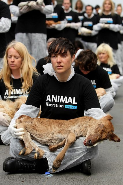 "An Animal Liberation Victoria activist cries as she holds a dead animal at Federation Square on October 1, 2013 in Melbourne, Australia. Over 200 activists gathered with the bodies of deceased animals to publicly grieve their deaths. Animal Liberation Victoria is against the treatment of animals as ""property"" an promotes a vegan lifestyle. (Photo by Graham Denholm/Getty Images)"