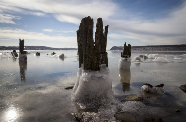 A thick layer of ice covers rotting pilings, in this view of the frozen Hudson River looking south towards the Palisades cliffs (right) as seen from the New York City river town suburb of Piermont, February 6, 2015. The New York region was gripped by bitter cold temperatures again Friday as another round of snow was forecast to move into the northeast United States over the weekend, according to local reports. (Photo by Mike Segar/Reuters)