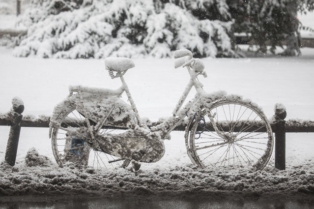 A snow-covered bicycle stands on a roadside in Wiesbaden, western Germany, Tuesday, January 10, 2014. (Photo by Frank Rumpenhorst/DPA via AP Photo)