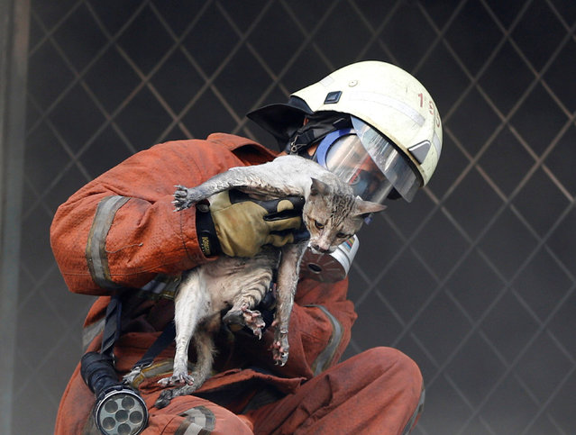 A firefighter rescues a cat during a large fire at Senen market in Jakarta, Indonesia January 19, 2017. (Photo by Darren Whiteside/Reuters)