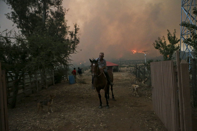 A resident rides a horse as a wildfire burns in Portezuelo, Chile, Sunday, January 29, 2017. Chilean President Michelle Bachelet has announced that the country will continue with its various measures to deal with wild fires, one of the biggest natural disasters in the country for decades, according to a government report released on Sunday. (Photo y Esteban Felix/AP Photo)