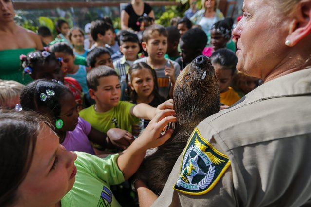 Farm Supervisor Jeanne Selander holds a two-toed sloth for visiting school children at the Monroe County Sheriff's Office Animal Farm at the Stock Island Detention Center in Key West, Florida, USA, 17 March 2016. The farm, which has been in operation since 1994, is located underneath the elevated jail facility. The farm is a haven for abandoned, seized and homeless farm and exotic animals from throughout the Florida Keys. A small select group of inmates are allowed to care for the animals and the facility is open to the public twice a month. (Photo by Erik S. Lesser/EPA)