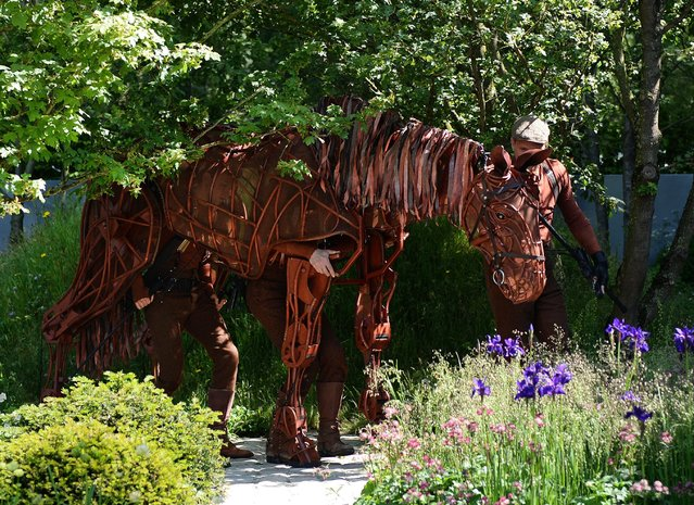 A theatrical war horse from a stage play walks through the Soldiers Charity garden to mark the centenary of World War I at the Chelsea Flower Show in London, Britain, 19 May 2014. The flower exhibition will run from 20 to 24 May. (Photo by Andy Rain/EPA)