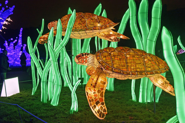 "A luminous lantern representing a turtle is displayed during the exhibition ""Ocean en voie d'illumination"" at the National Museum of Natural History in Paris, France on November 18, 2019. For the second time in its history, the National Museum of Natural History offers a nocturnal walk in the light of monumental light structures representing animals up to 15 meters that will be held from November 18, 2019 to January 19, 2020. (Photo by Edmond Sadaka Edmond/SIPA Press/Rex Features/Shutterstock)"