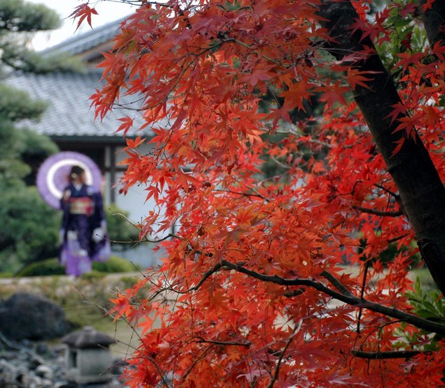 """Touring the Koko-en Gardens adjacent to the Himeji castle was an unexpected highlight of our visit"", wrote Jeff Solar, 64, of Silver Spring, Md., about his trip to Japan. ""The fall colors were outstanding and the gardens were both amazing and a bargain (just a few Yen added to the cost of the Himeji Castle admission)"". (Photo by Jeff Solar/2017 Washington Post Travel Photo Contest)"