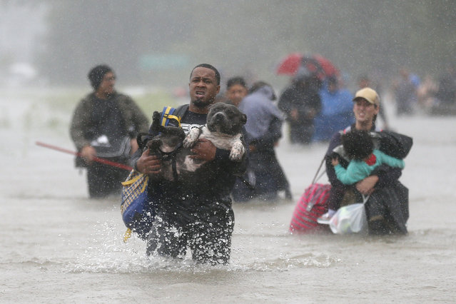 Isiah Courtney carries his dog Bruce through flood waters in Beaumont Place, Houston, Texas on August 28, 2017. (Photo by Jonathan Bachman/Reuters)