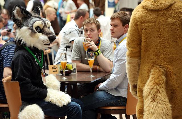 Furry enthusiasts attend the Eurofurence 2014 conference on August 22, 2014 in Berlin, Germany. Furry fandom, a term used in zines as early as 1983 and also known as furrydom, furridom, fur fandom or furdom, refers to a subculture whose followers express an interest in anthropomorphic, or half-human, half-animal, creatures in literature, cartoons, pop culture, or other artistic contexts. (Photo by Adam Berry/Getty Images)