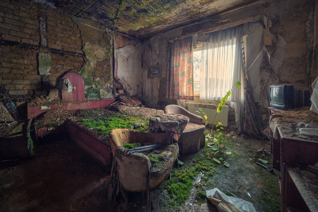 """""""In a Bed of Moss"""". (Matthias Haker)"""