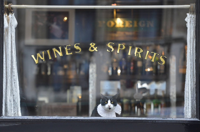 "A cat watches passers-by from a pub window in central London, February 27, 2013. ""Ray Brown"" is the resident cat at the seventeenth century public house, ""The Seven Stars"" in the legal district of London.  (Photo by Toby Melville/Reuters)"