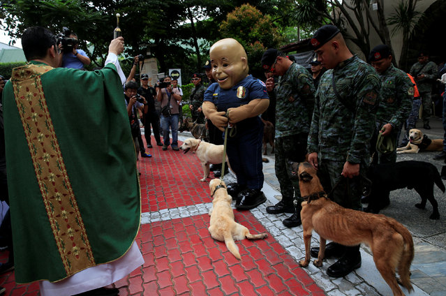 Catholic priest Reverend Arnel Recinto blesses members of the K9 units of Philippine National Police (PNP) Special Action Force and the mascot of the PNP, named after their Chief Director General Ronald Dela Rosa, as they join a mass blessing for rescue dogs during the celebration of the feast day of St. Francis of Assisi, patron Saint of Animals, at the St. John Paul II parish church in Eastwood, Quezon city, metro Manila, Philippines October 2, 2016. (Photo by Romeo Ranoco/Reuters)