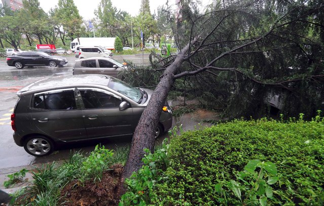 A car is crushed by an uprooted tree due to strong winds caused by Typhoon Chaba in the southern city of Changwon on October 5, 2016. (Photo by AFP Photo/Yonhap)