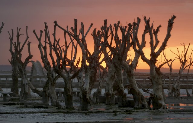 Deadwood is seen at the sunset in Epecuen Village, November 5, 2015. (Photo by Enrique Marcarian/Reuters)