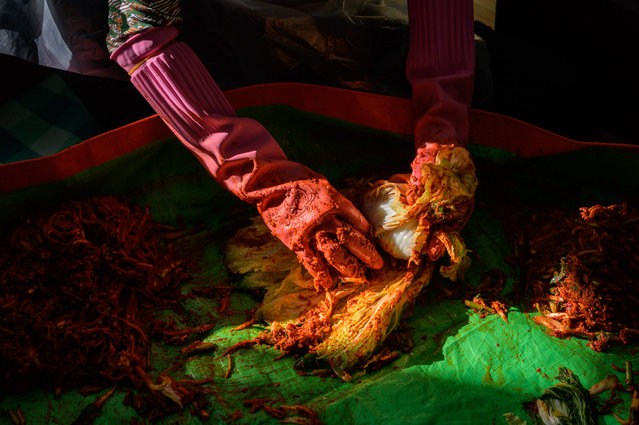 """In photo taken on November 29, 2020 friends of Lee Young-ja prepare cabbages to make kimchi, during a traditional communal process known as """"kimjang"""", at her home in the eastern port city of Donghae. (Photo by Ed Jones/AFP Photo)"""