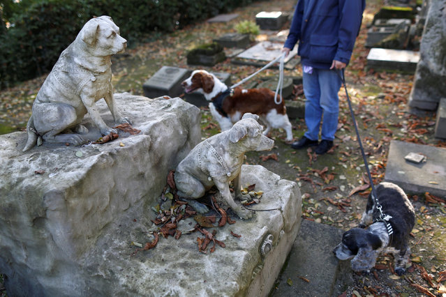 Dogs of a visitor pass by the grave of Marquise and Tony, the two small dogs of the Princess Lobanoff de Rostoff at the cimetiere des chiens (Cemetery of dogs) ahead of the commemoration of All Saints Day at the Montmartre cemetery in Asnieres, northern Paris, France, October 30, 2016. (Photo by Charles Platiau/Reuters)