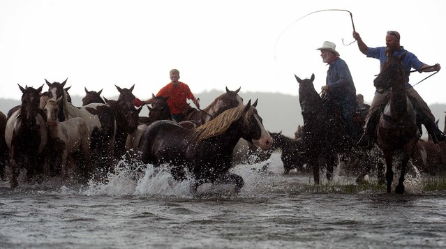 Saltwater Cowboys drive the Chincoteague Pony herd into Assateague Channel in a heavy downpour on Wednesday A portion of the herd will be auctioned on Thursday. (Photo by Jay Diem/Eastern Shore News)