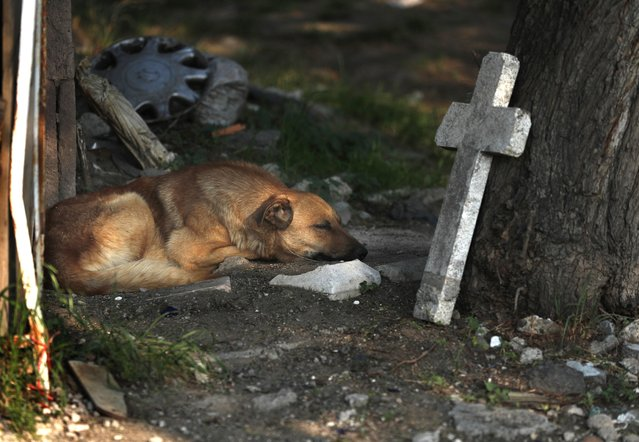 In this May 27, 2020 file photo, a street dog sleeps amid the tombs at the San Nicolas Tolentino Pantheon cemetery as workers make space for more burials in the Iztapalapa neighborhood of Mexico City, amid the coronavirus pandemic. As Mexico approaches 200,000 in officially test-confirmed deaths from COVID-19, the real death toll is probably higher due to the country's extremely low rate of testing. (Photo by Marco Ugarte/AP Photo/File)