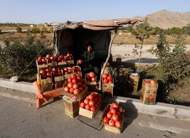 An Afghan man sells pomegranates along a street in Kabul, Afghanistan October 19, 2016. (Photo by Omar Sobhani/Reuters)
