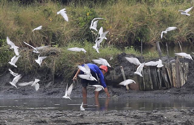A man catches fish on a shallow part of a pond as birds fly by in Cavite city, south of Manila, Philippines February 17, 2016. (Photo by Romeo Ranoco/Reuters)