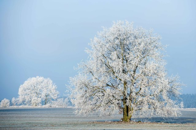 Hoarfrost covers the landscape in Sieversdorf, eastern Germany, on December 5, 2016. (Photo by Patrick Pleul/AFP Photo/DPA)
