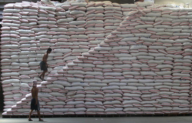A worker walks up a pile of rice at a warehouse of the Philippines National Food Authority in Manila May 12, 2015. The state grains agency continues stockpiling ahead of the lean harvest season beginning July, aiming to keep local prices of the staple food affordable to poor Filipinos while bracing for the impact of the dry season on rice harvest. A closely watched forecast by Japan on Tuesday confirmed the El Nino weather phenomenon's return this year. (Photo by Romeo Ranoco/Reuters)