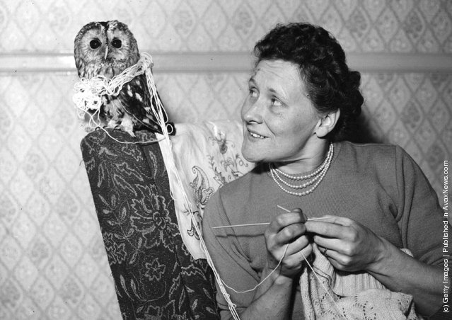 1949: An owl wrapped up in wool next to a woman knitting