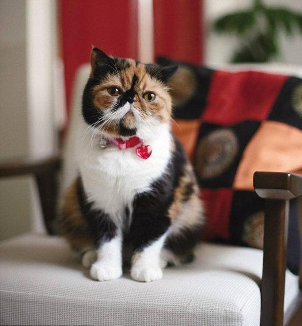 Meet Memebon – The Cutest Kitten In The World