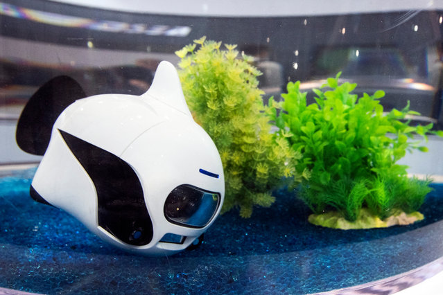 """Robosea's Biki drone """"swims"""" in a tank at the Convention Center in Las Vegas, Nevada, USA, 07 January 2020. (Photo by Etienne Laurent/EPA/EFE)"""