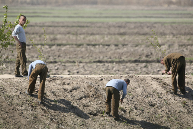 North Korean soldiers dig up eatable plants on the banks of the Yalu River near the North Korean town of Sinuiju, May 13, 2010. (Photo by Jacky Chen/Reuters)