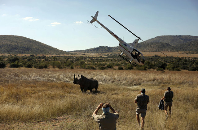 A helicopter flies over as workers approach a tranquillised rhino before dehorning it in an effort to deter poaching, amid the spread of the coronavirus disease (COVID-19), at the Pilanesberg Game Reserve in North West Province, South Africa, May 12, 2020. (Photo by Siphiwe Sibeko/Reuters)